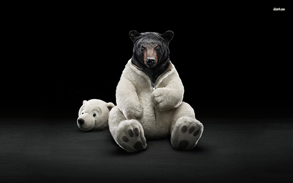 4831-black-bear-dressed-as-a-polar-bear-1680x1050-animal-wallpaper.jpg