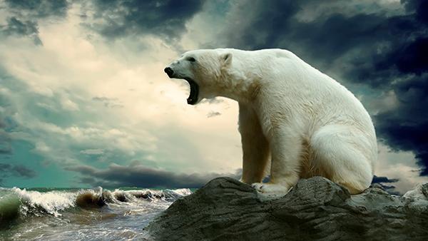 white-bear-.jpg