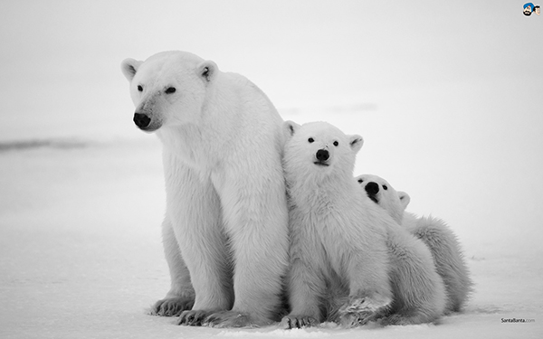 white-bear-hd-photos.jpg