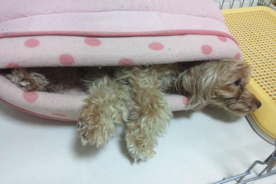 ジンジャーのベッド
