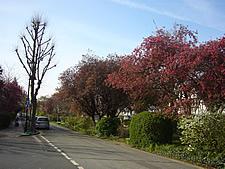 葉桜とピンクの桜