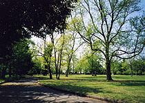 6年前の馬場記念公園・・・昨年の台風でたくさんの木が倒れました。