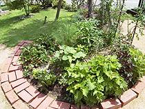 ささやかな庭のさらにささやかなキッチンガーデン
