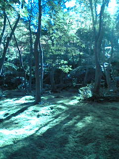 苔のお庭…