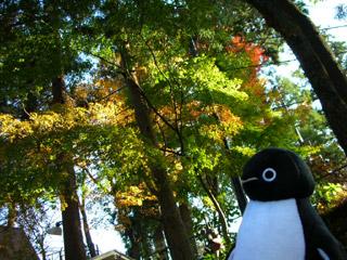 さいごの紅葉+suicaペンギン