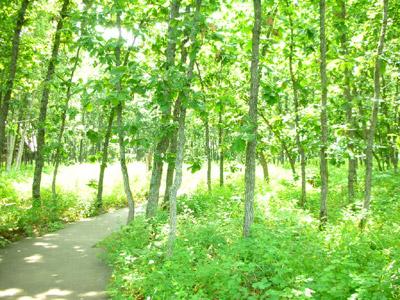 夏の木々は澄んだみどり。