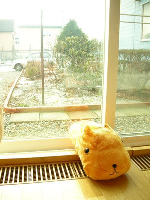 雪ない年末正月