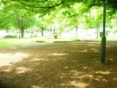 大通り公園のみどり