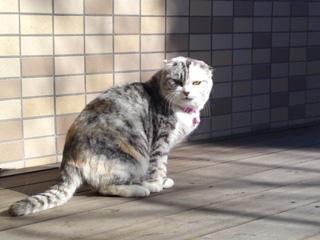 信貴山のどか村の猫