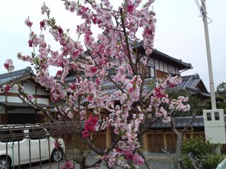 よその庭に植わっていた綺麗な花