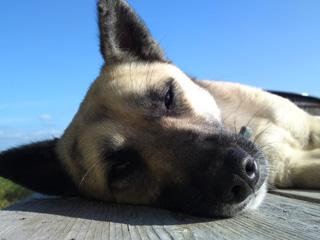 傍で寝ていたコータロー