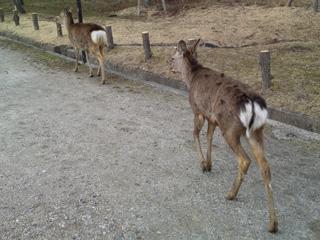 ストーキング鹿