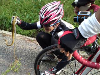 @ビターさんがヘビを捕獲w