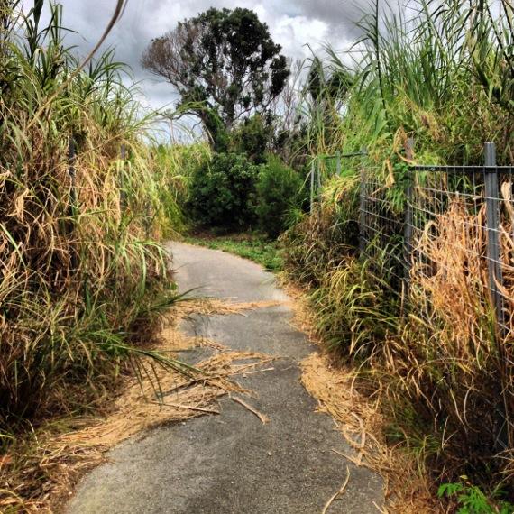 瀬底島の農道