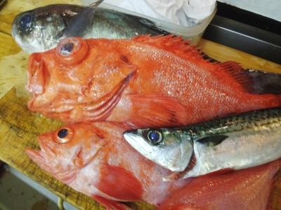冬の美味しい魚