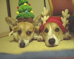 ちょっと早いクリスマス。