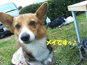 メイは、高松から来ましたぁ〜。怖いおねーさんばっかでしたぁ〜!