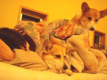 みんなで寝るんだぁ〜。
