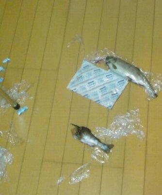 衝撃の殺魚現場