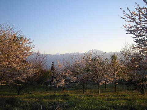20070429小荒間桜と南アルプス