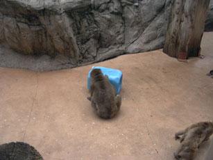 遊び盛りの幼い日本猿