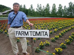 ファーム富田のお花畑
