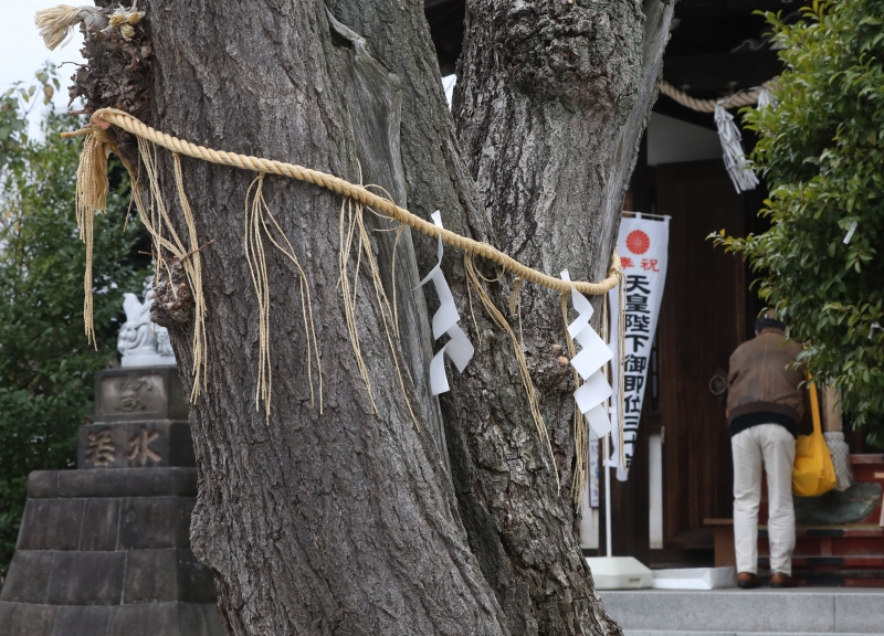 0Y6A1486 小日向神社.JPG