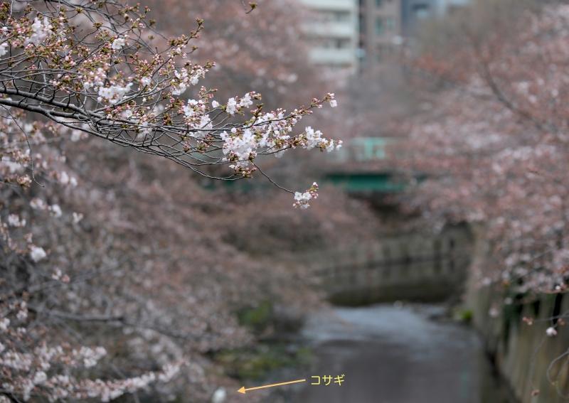 0Y6A1787神田川.JPG