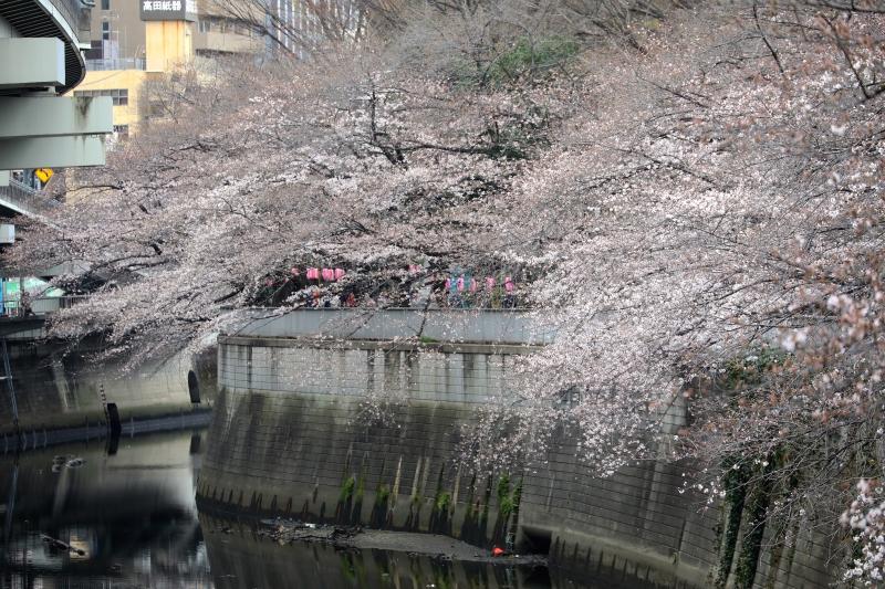 0Y6A1519江戸川橋.JPG