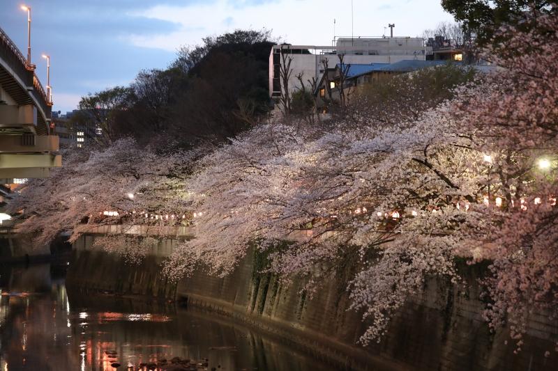 0Y6A2293江戸川橋.JPG