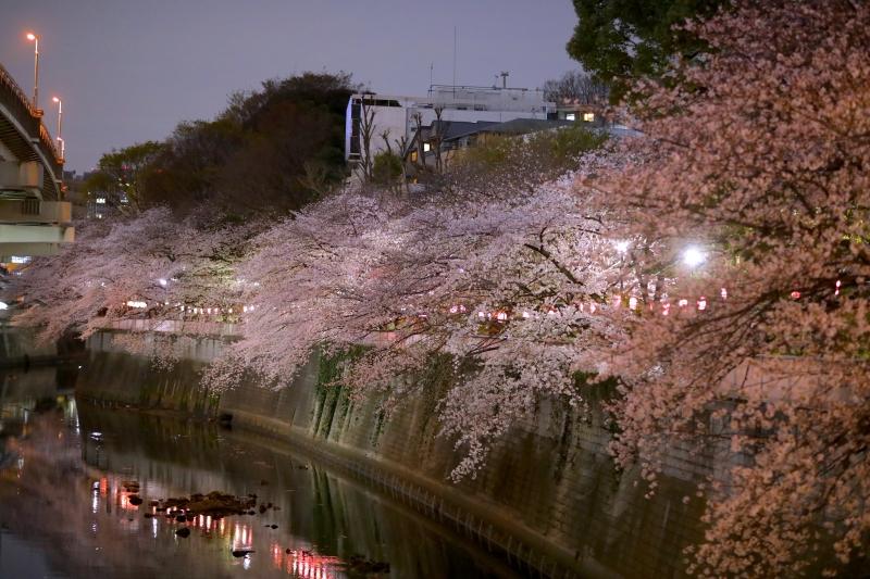 0Y6A2542江戸川橋.JPG