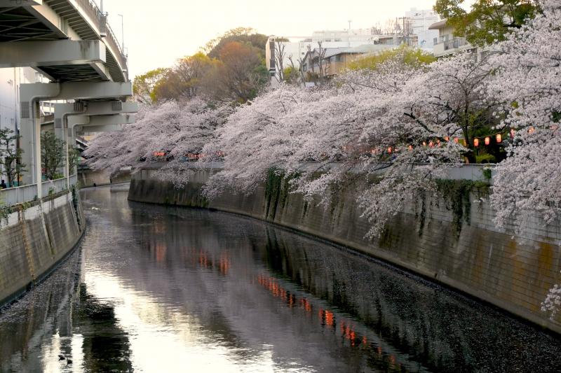 0Y6A3745江戸川橋.JPG