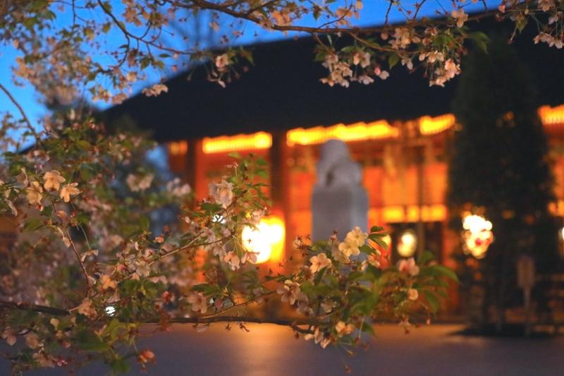 0Y6A4154赤城神社.JPG