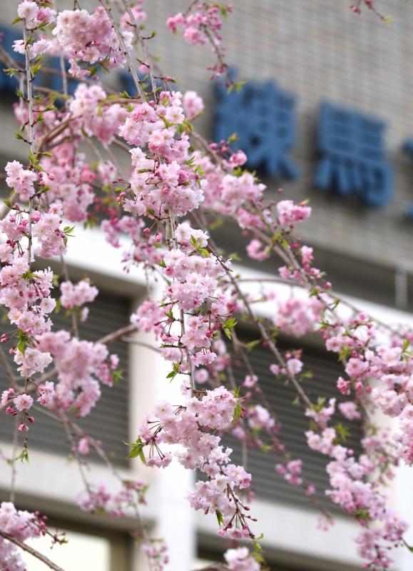 0Y6A4664区民会館.JPG