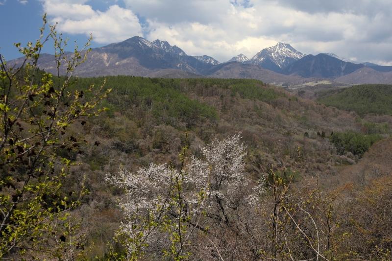 0Y6A7130南八ヶ岳のコピー.jpg