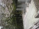野田山墓地 春のお彼岸