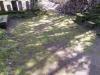 野田山墓地 墓掃除