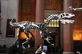 自然史博物館。化石。