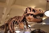 漢なら化石に萌えましょう