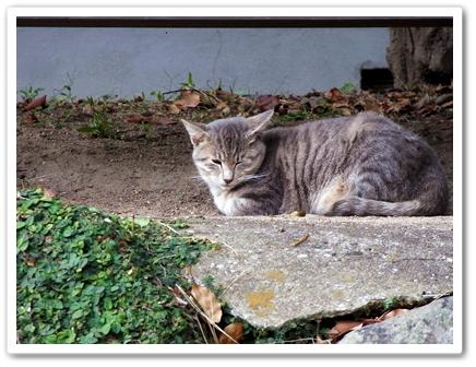 猫6.JPG