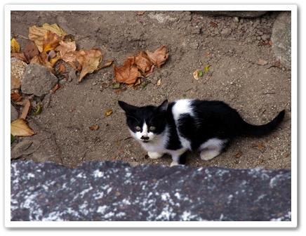 猫7.JPG
