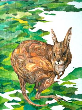 ウサギワラビー