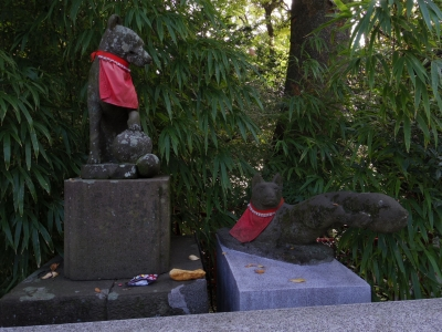 白笹稲荷(お狐様2)