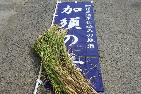 篠塚 山田錦1610_2