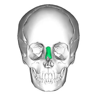 bridge of nasal