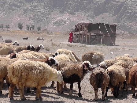ギャッべ イラン現地 0211.jpg