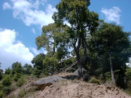TIPA hill