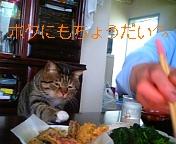 20070620_52169.JPG