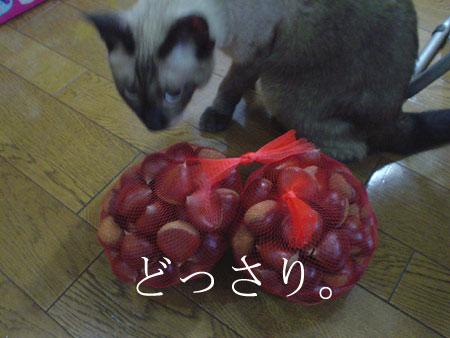 事務猫と栗