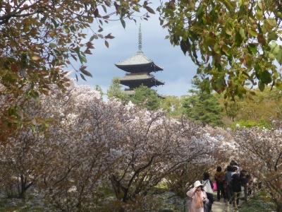 京都 仁和寺